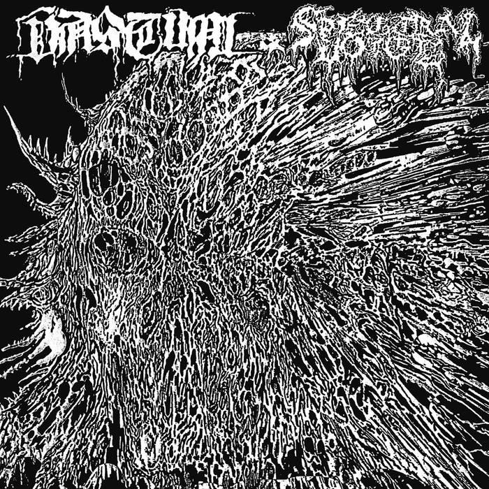Vastum/Spectral Voice – Split